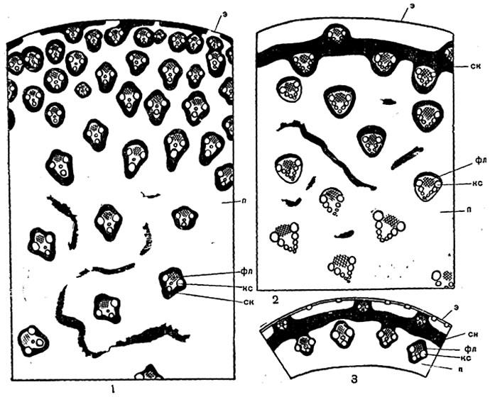Схемы строения стеблей
