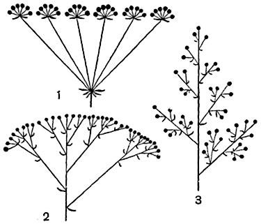 Схемы некоторых сложных