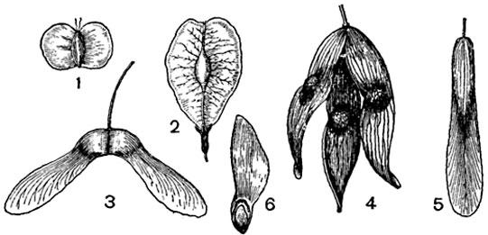 Лекарственные деревья купить семена, узнать названия, виды